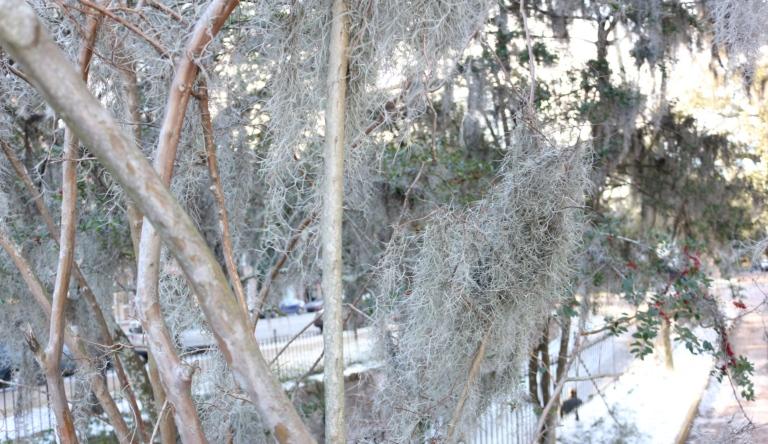 Blog 2 cool trees_Fotor