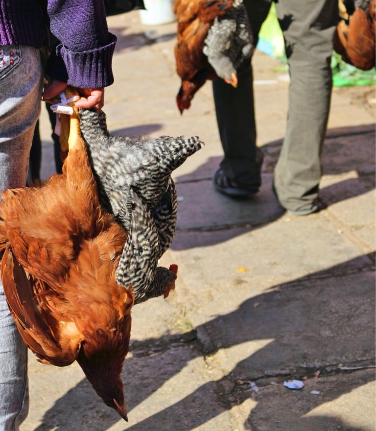 Blog7 Chickens @ Market_Fotor