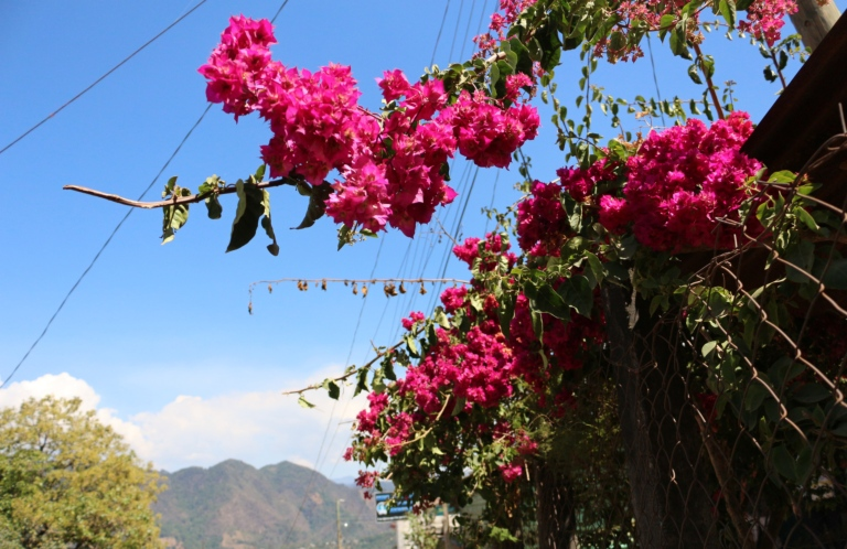 Blog9 Flowers_Fotor