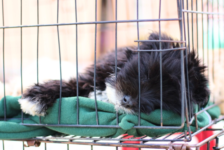 Blog9 Puppy_Fotor