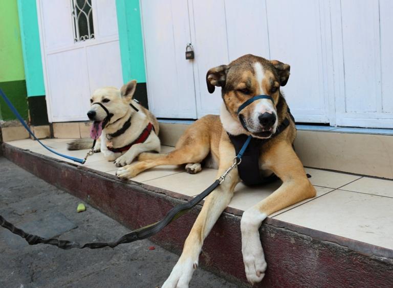 Dog Break_Fotor