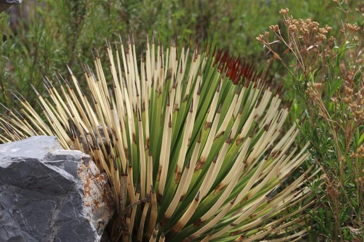 Wierd Cactus Thingy_Fotor